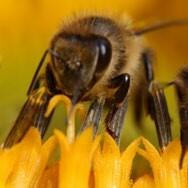 Bienen-188x188.jpg