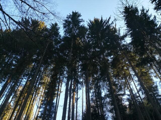 Wald in der Fuchsklinge in Calw-Hirsau