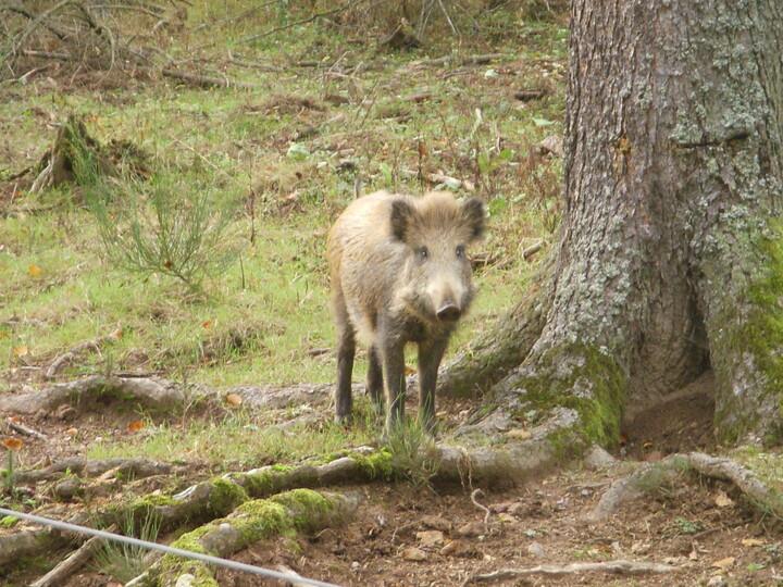 Wildschweingehege Wimberg